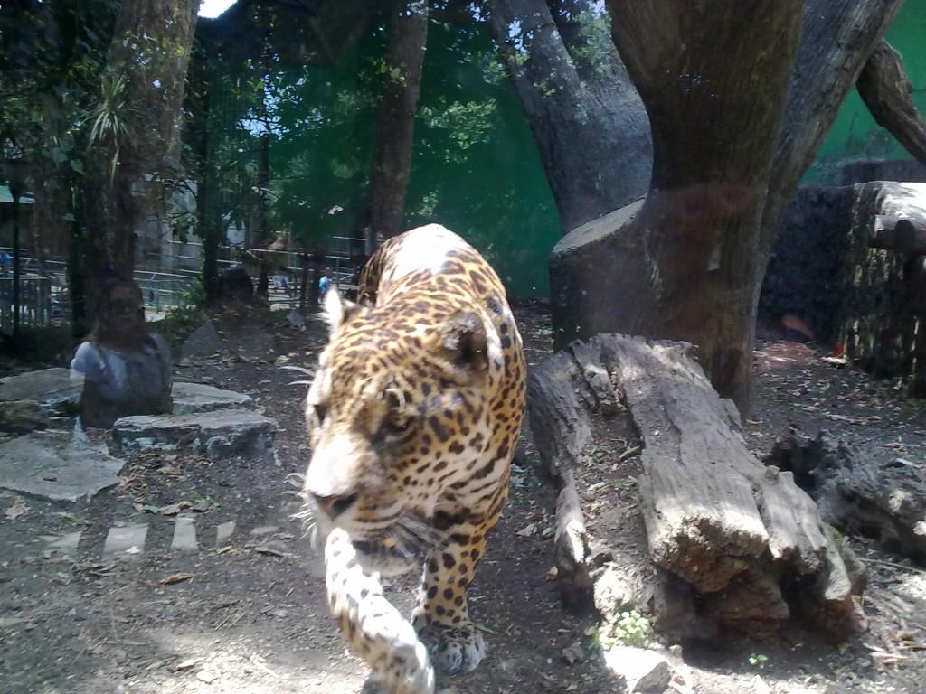 Zoo Di Pistoia Orario E Biglietti Toscana In