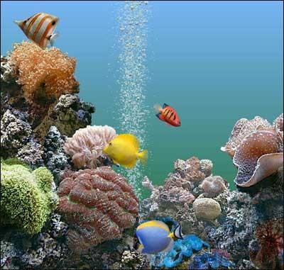 Itinerari turistici isola d elba acquario toscana in for Acquari marini offerte